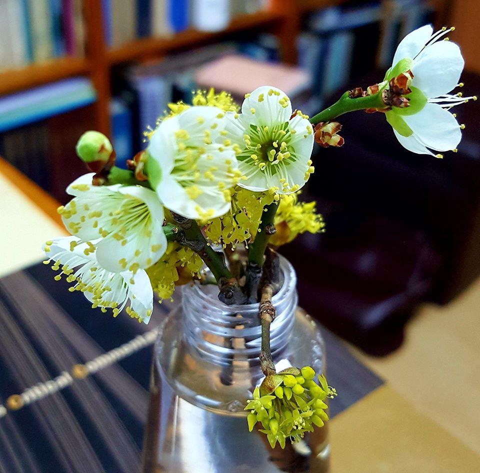 봄꽃.jpg