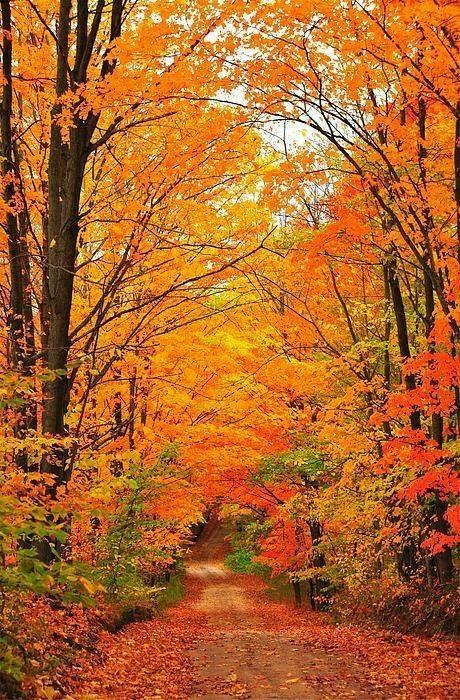 beautiful autumn colors in Michigan.jpg