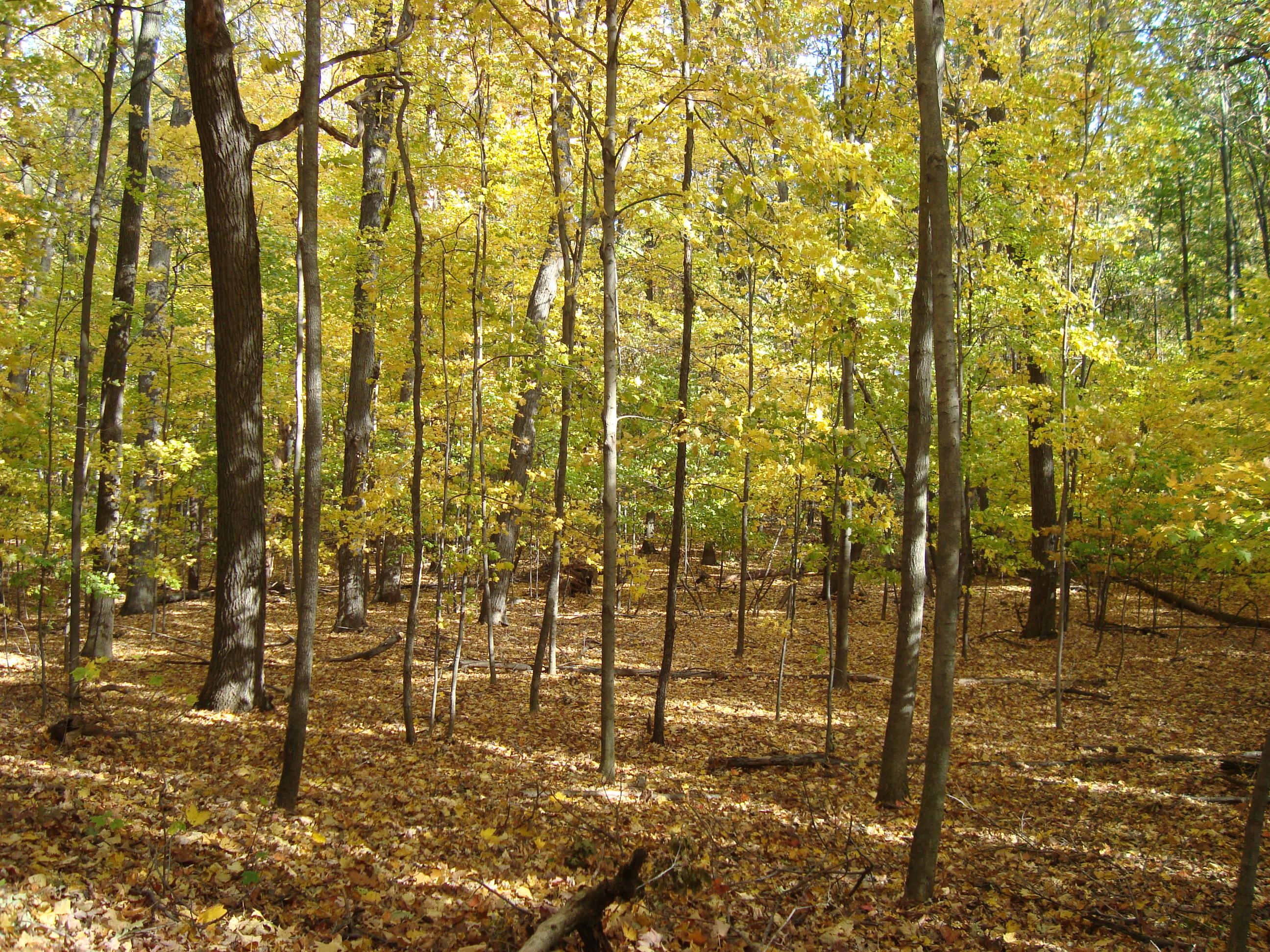 뒷 숲.JPG