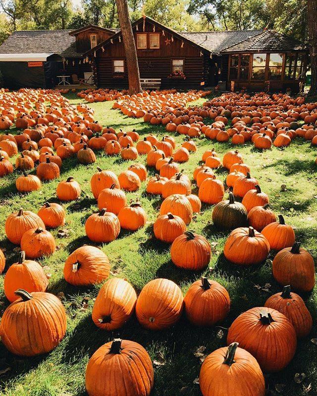 가을과 호박.jpg