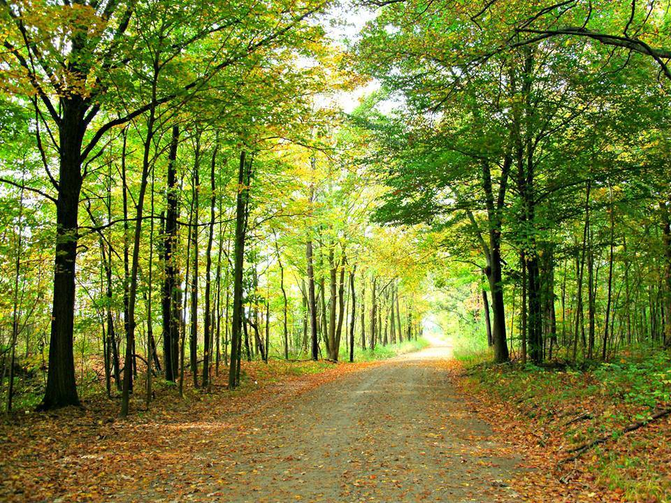 the tunnel of trees up north.jpg