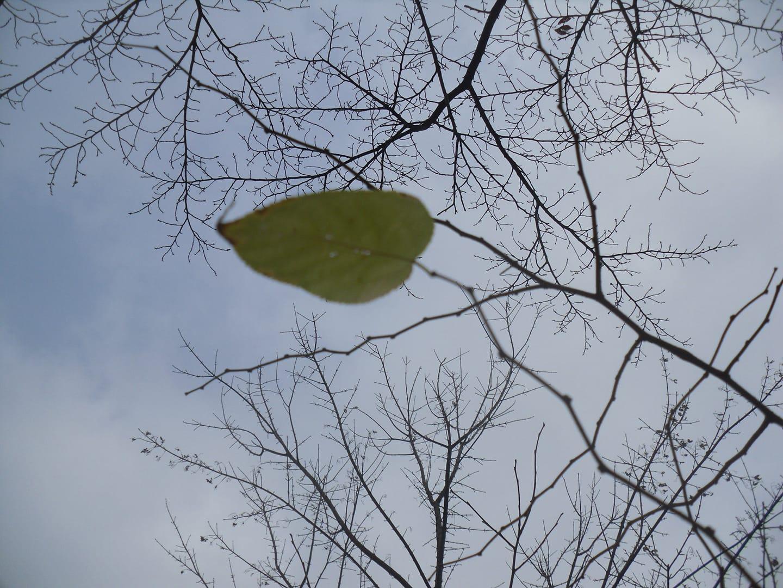 마지막 잎새.jpg