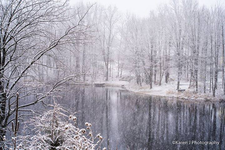 This little pond in Belmont.jpg